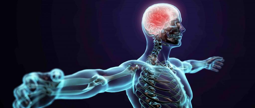 shutterstock_130533281_central nervous system